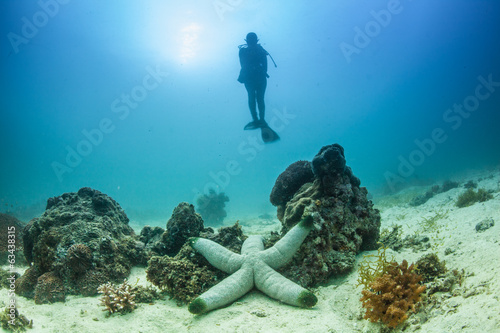 giant starfish and diver
