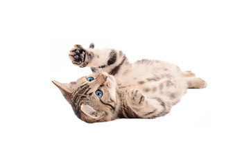 Adorable Tabby Kitten laying on its back