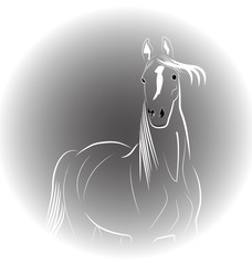 Portrait of horse logo vector