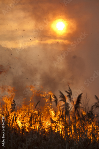 fire the reeds