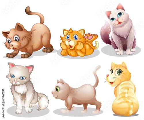Playful cats - 63440937