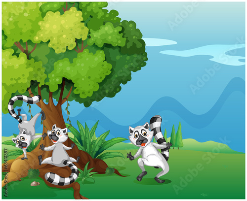 Playful lemurs playing near the big tree