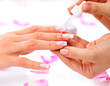 Cuticle oil. Manicure and Hands Spa. Woman Hands Closeup