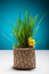Easter still life with chicken and grass in a basket.