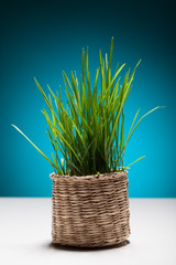 Easter still life with grass in a small basket.