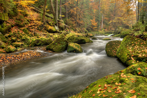 Autumn creek in the national park Bohemian Switzerland