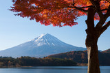 Fotoroleta 河口湖の紅葉と富士山