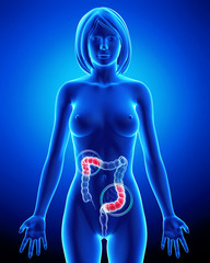 Female anatomy of partial pain in digestive system