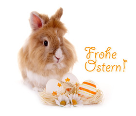 Osterhase – Frohe Ostern