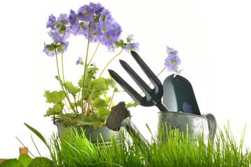attrezzi giardino erba e primaula fondo bianco orizzontale