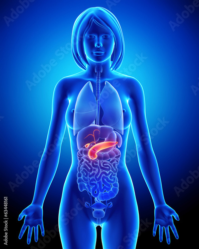 full part Female biliary anatomy in blue