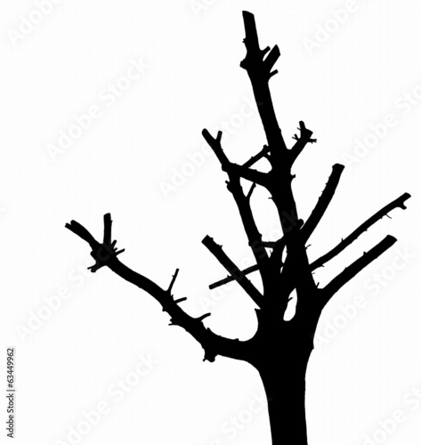 Silhouette of trimmed tree on the white background