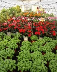 serra con piante da orto e fiori