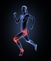 Female runner anatomy