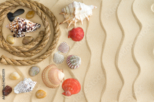 Marine still life with shells, stones and a rope