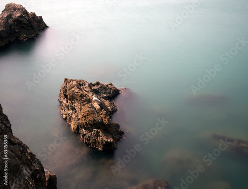Rocky shoreline with gull and submerged rocks, silky water effec