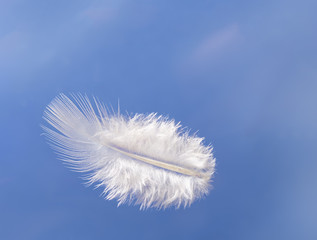 Fluffy feather floats over sky - light, lightness concept
