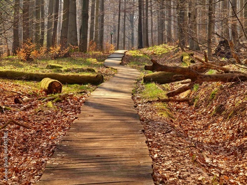 Tourist footpath in autumn forest.