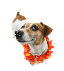 smiling dog tropical vacation bright wreath flowers