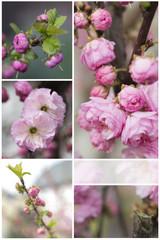 Frühling ist rosa