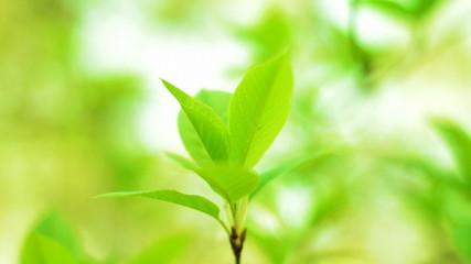 beautiful green leaf in the wind