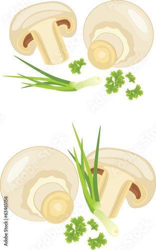 Mushrooms with parsley and chives isolated on the white
