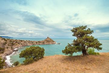 Tree and sea