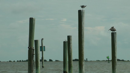 Birds sitting on posts in Cape Fear River