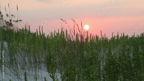 Sunrise over grassy sand dunes