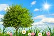 Idyllische Wiese bei schönstem Wetter
