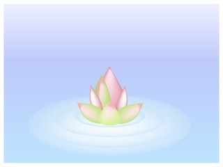 A Pink Lotus Flower on Blue Water