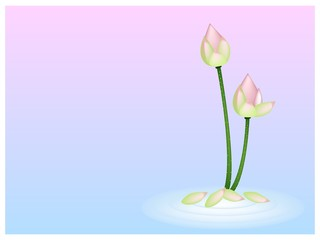 Pink Lotus Flower on Pink with Blue Background