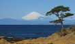 Mountain fuji and the ocean from sagami bay , yokosuka japan - 63475379