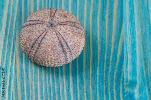 sea urchins on blue paint texture