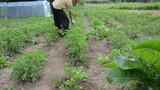 Farmer man manual spray pesticides on plants. Kill weed vermin poster