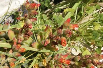 Mediterranean flower. tropical flower