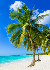 Tropical sandy beach with exotic palm trees, against blue sky