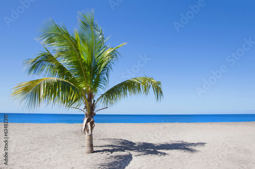 canvas print picture Eine Palme am Strand