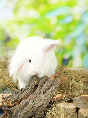 White cute rabbit on hay, on nature background