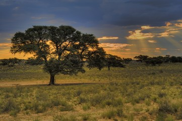 Desert Sunrise, Kgalagadi Transfrontier Park,