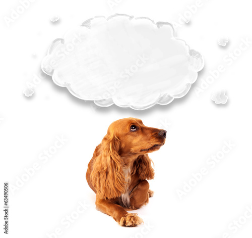 Cute cocker spaniel with cloud