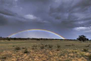 Rainbow in kalahari desert after summer rain shower