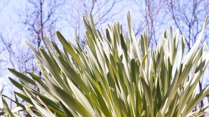 зелёная трава голубое небо