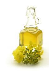 Brassica napus कैनोला Rapeseed Colza olio di canola