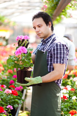 Greenhouse worker holding a flower pot
