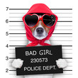 canvas print picture - mugshot lady dog