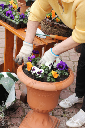 Garden planting with pansies and pots on wooden table