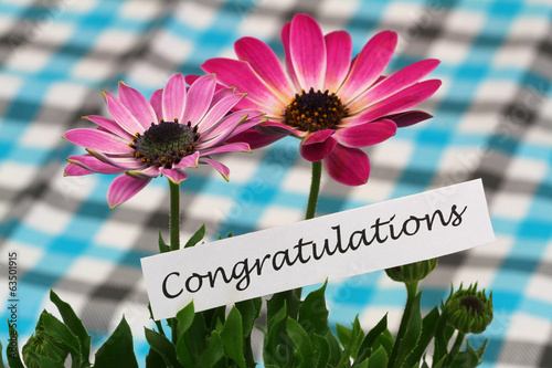 Congratulations card with pink daisies