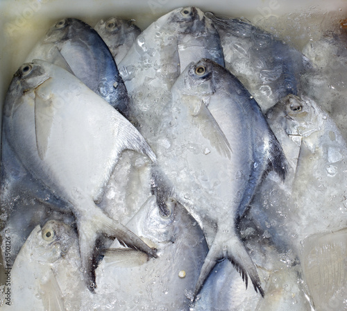 Butterfish from Gulf of Thailand