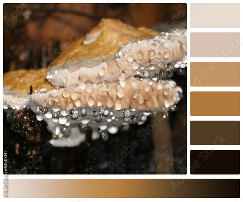 Dew Drops On Mushrooms. Palette With Complimentary Colour Swatch